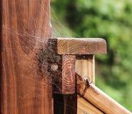 Den stora grässpindeln som bevakar hennes nyligen kläckte barnaskara av, behandla som ett barn spindlar Royaltyfria Bilder