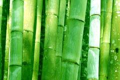 Den stora gröna bambudungen badade skogbakgrund Arkivfoto