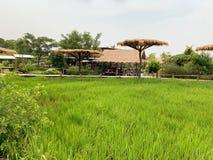 Den stora gröna fältbakgrunden fotografering för bildbyråer