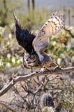 Stor Horned Owl Royaltyfria Foton