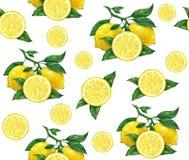 Den stora illustrationen av den härliga gula citronen bär frukt på vit bakgrund Teckning för vattenfärg av citronen seamless mode Arkivfoton