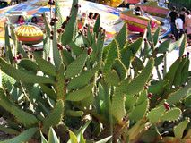 Den stora kaktuns parkerar in port Aventura Spanien Arkivfoto