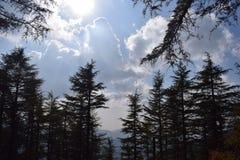 Den stora kombinationen av träd, himmel, moln och solen Royaltyfri Foto