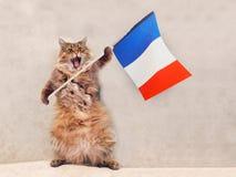 Den stora lurviga katten är det mycket roliga anseendet Frankrike flagga 10 Royaltyfria Bilder