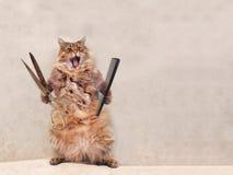 Den stora lurviga katten är det mycket roliga anseendet groomer 16 Royaltyfria Foton