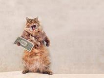 Den stora lurviga katten är det mycket roliga anseendet skydd 10 Arkivbild