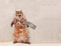 Den stora lurviga katten är det mycket roliga anseendet skydd 11 Arkivfoto