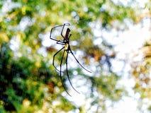 Den stora spindeln på det är spiderweb Bokeh arkivfoton