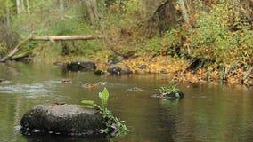 Den stora stenlögnen på botten shoaled höstfloden lager videofilmer