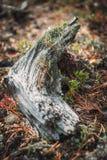 Den stora stensoppet har dolt bland vegetation i trät royaltyfria foton