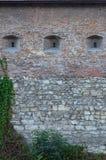Den stora stenväggen av en forntida slott som är bevuxen med den massiva murgrönan, förgrena sig i Lviv, Ukrain Royaltyfria Foton