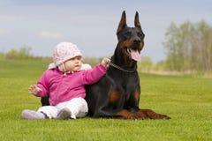 Den stora svarta dobermanen är den bästa babysitteren och försvararen för liten cu Arkivbild