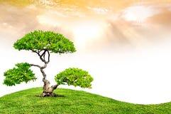 Den stora treen Royaltyfri Fotografi
