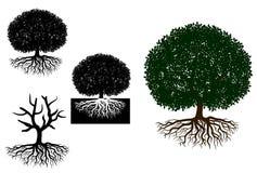 Den stora treen med rotar Royaltyfri Foto