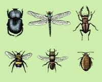 Den stora uppsättningen av krypfelskalbaggar och bin många art i stil för gammal hand för tappning dragen inristade illustrationt vektor illustrationer