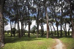 den storartade parken går Royaltyfri Foto