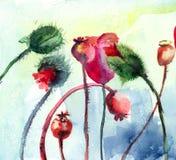 Den Stylized vallmon blommar illustrationen Fotografering för Bildbyråer