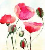 Den Stylized vallmon blommar illustrationen Arkivfoto