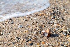 Den suddiga semestern kopplar av begrepp, havslandskap med skalet och wav Royaltyfria Bilder