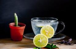 Den sunda drinken, citronsodavatten, den växt- drinken i härligt crystal exponeringsglas med den lilla maträtten och kaktuns lägg arkivbild