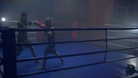 Den sunda livsstilen, boxare för en duell med en partner i boxninghandskar på cirkeln på sportklubban under utbildning stock video