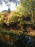 Den Sunny Autumn dagen parkerar in Arkivfoton