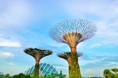 Den Supertree dungen Arkivbilder