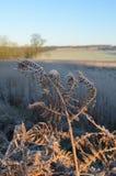 Den Sussex bygden i vinter Arkivfoto