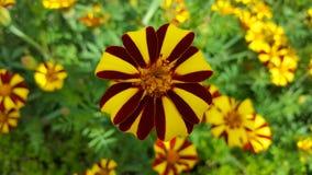 Den Sussex trädgården blommar 3 Royaltyfria Foton