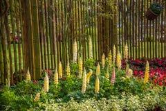 Den Suzhou piken parkerar den trädgårds- Lu-fackblomman Royaltyfria Bilder