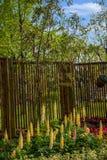 Den Suzhou piken parkerar den trädgårds- Lu-fackblomman Arkivfoto