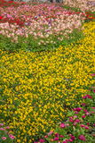 Den Suzhou piken parkerar trädgårds- blommor Fotografering för Bildbyråer