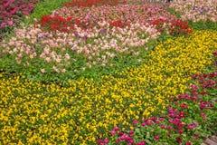 Den Suzhou piken parkerar trädgårds- blommor Royaltyfria Foton
