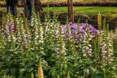 Den Suzhou piken parkerar trädgårds- blommor Royaltyfri Bild