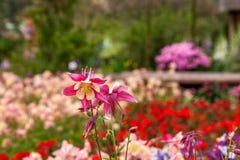 Den Suzhou piken parkerar trädgårds- blommor Royaltyfri Foto