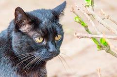 Den svart katten Arkivfoto