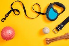Den svarta det läderhundhalsbandet, benet, bollen och blått kopplar fäst på gul bakgrund Top beskådar Royaltyfri Fotografi