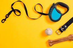 Den svarta det läderhundhalsbandet, benet, bollen och blått kopplar fäst på gul bakgrund Top beskådar Fotografering för Bildbyråer