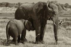 den svarta elefantvalpen diar w Royaltyfria Foton