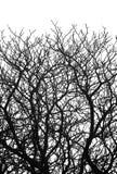 den svarta filialen silhouettes treewhite Arkivfoto