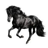 den svarta galopphästen isolerade vita körningar Arkivfoton