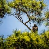 Den svarta gammet sörjer in trädet Arkivfoton