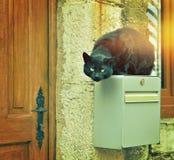 Den svarta gatakatten hoppade på husstolpeasken Arkivfoton