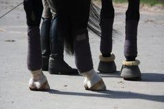 Den svarta hästen lägger benen på ryggen, och ryttaren lägger benen på ryggen Arkivfoton