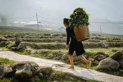 Den svarta Hmong kvinnan på ris terrasserar i SaPa Royaltyfria Foton