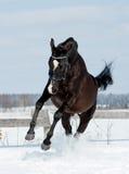 Den svarta hästen hoppar Royaltyfri Fotografi