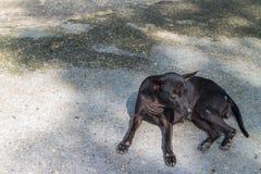 Den svarta hunden ligger ner på gatan Fotografering för Bildbyråer
