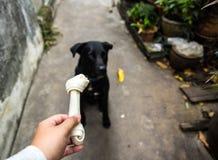 Den svarta hunden med mat Arkivfoto