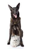 Den svarta hunden skyddar en katt. Royaltyfri Bild