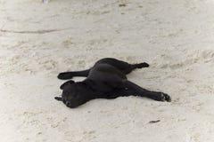 Den svarta hunden sover på stranden Arkivfoto